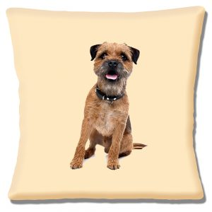 Border Terrier Dog Cushion or Cushion Cover Looking Straight Ahead