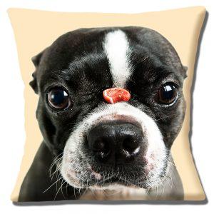 Boston Terrier Dog Cushion or Cushion Cover Treat Cream