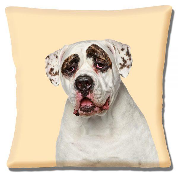 American Bulldog Cushion or Cushion Cover Dog Cream