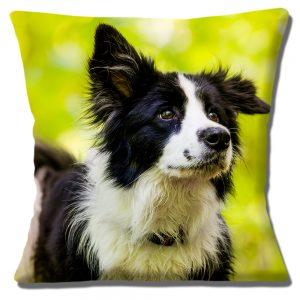 Border Collie Dog Cushion or Cushion Cover Cocked Ear