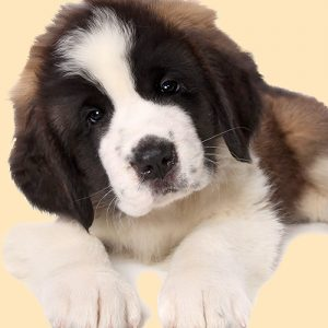Saint Bernard Puppy Dog Cushion or Cushion Cover Brown White