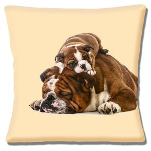 English Bulldog with Puppy Cushion or Cushion Cover Taking a Nap