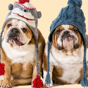 English Bulldogs Cushion or Cushion Cover Knitted Woolly Hats