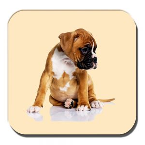 Boxer Pup Coaster Chubby Tan White Puppy Dog Cream