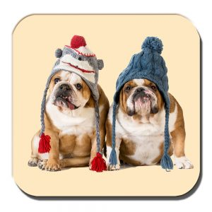 English Bulldogs Coaster Young Dogs Tan White Winter Knitted Hats