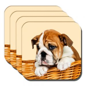 English Bulldog Puppy Coasters White Tan Pup Basket Cream Acrylic - Set of 4