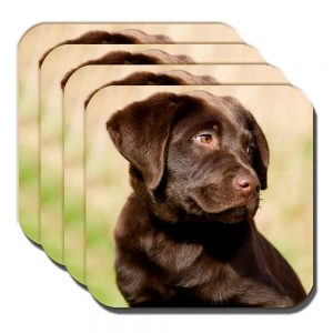 Chocolate Labrador Pup Coasters Young Puppy Dog Outdoors Acrylic - Set of 4