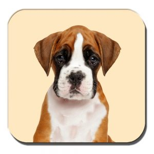 Boxer Pup Coaster Tan White Young Puppy Dog Cream