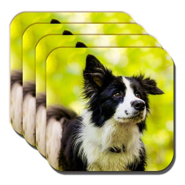 Border Collie Coaster Black White Sheepdog Cocked Ear - Set of 4