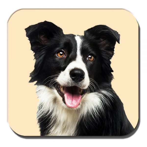 Border Collie Coaster Black White Sheepdog Cream