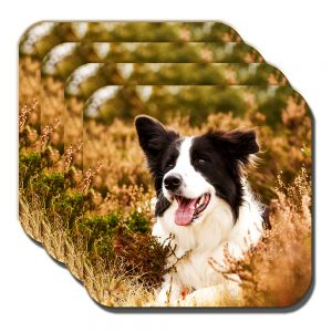Border Collie Coaster Black White Sheepdog Heather Outdoors - Set of 4