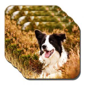 Border Collie Coaster Black White Sheepdog Heather Outdoors - Set of 4