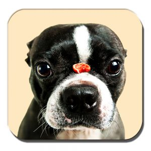 Boston Terrier Coaster Dog Treat Balancing Nose Acrylic Cream