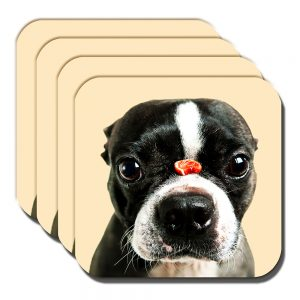Boston Terrier Coaster Dog Treat Balancing Nose Acrylic Cream - Set of 4