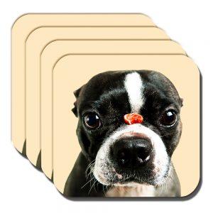 Boston Terrier Coaster Dog Treat Balancing Nose Acrylic Cream - Set of 4