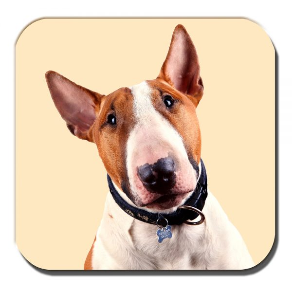 Bull Terrier Coaster Adult Tan White Dog Acrylic Cream