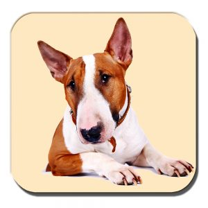 Bull Terrier Coaster Adult White Tan Dog Collar Acrylic Cream