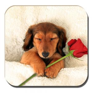 Dachshund Coaster Sleepy Tan Pup Dog Red Rose