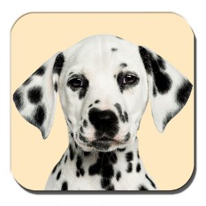 Dalmation Coaster Black White Spotty Puppy Dog Cream