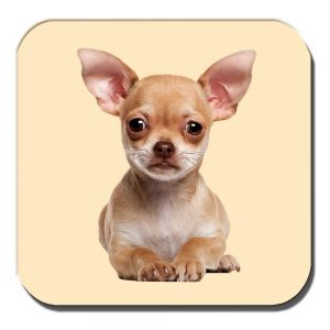 Chihuahua Coaster Fawn Puppy Dog Laying Down Acrylic Cream