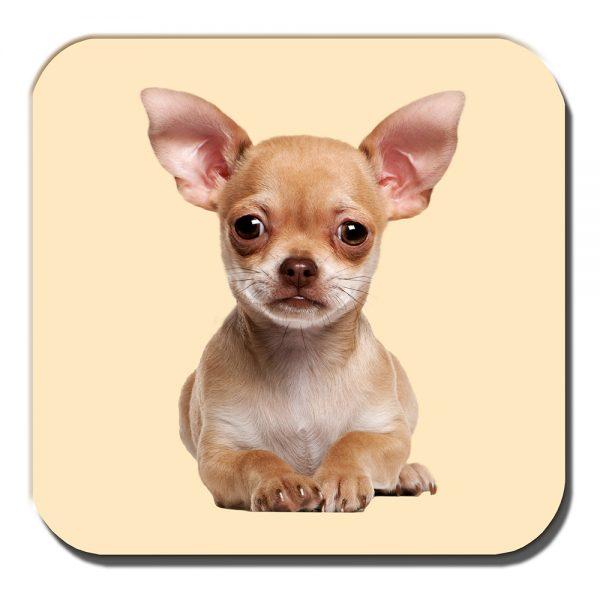 Chihuahua Coaster Fawn Puppy Dog Laying Down Acrylic Cream
