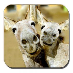 Donkey Mules Coaster Two Donkeys Pulling Funny Faces Smiling